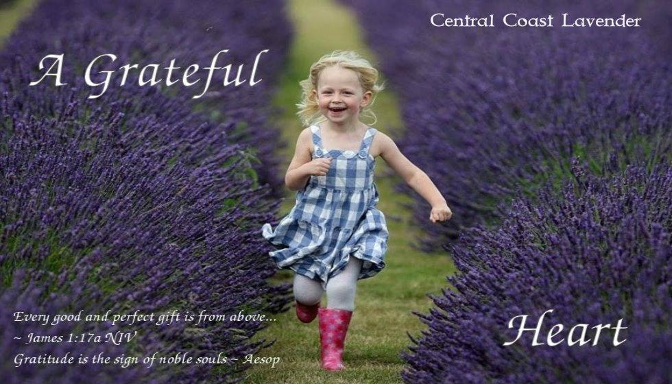 lavender52.jpg